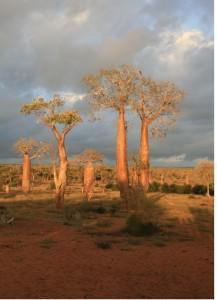 Bosque espinoso del sur de Madagascar